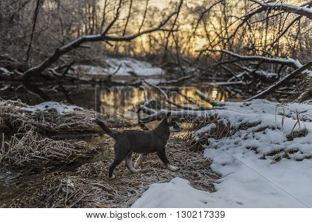 Puppy is walking on the snow-covered riverbank