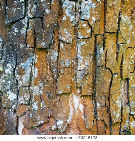 Bark Background, Close Up