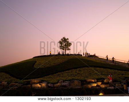 Baum auf hill