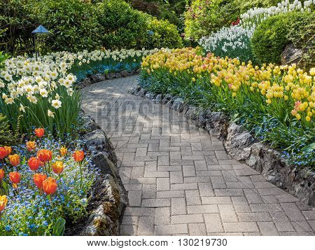 Paved walkway in the spring garden among blooming tulips and daffodils