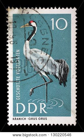 ZAGREB, CROATIA - JULY 02: a stamp printed in GDR shows Common Crane, Grus grus, Protection of Native Birds, circa 1967, on July 02, 2014, Zagreb, Croatia