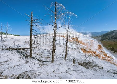 Canary Spring amazes with bright white and orange colors Mammoth Hot Springs