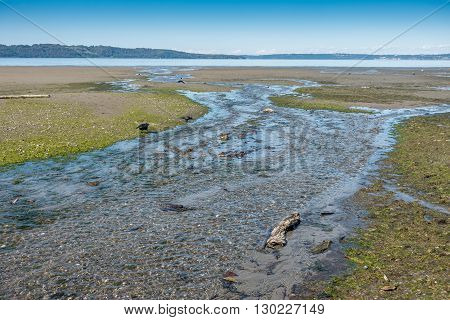 A stream at Dash Point State Park flows across the shoreline into the Puget Sound.