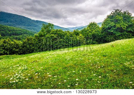 Forest On Hillside Meadow In Mountain