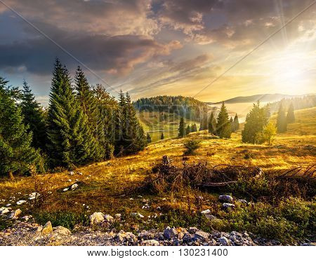 Coniferous Forest On A Hillside In Foggy Mountains At Sunset