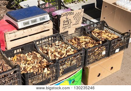 SAMARA RUSSIA - APRIL 24 2016: Fresh edible mushrooms of new harvest are ready for sale on the local market