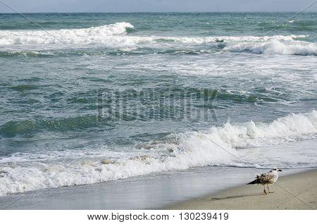 Photo of Single Seagull At Sea Coast