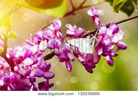 Spring or Summer Flower Blossom in Sunny Day