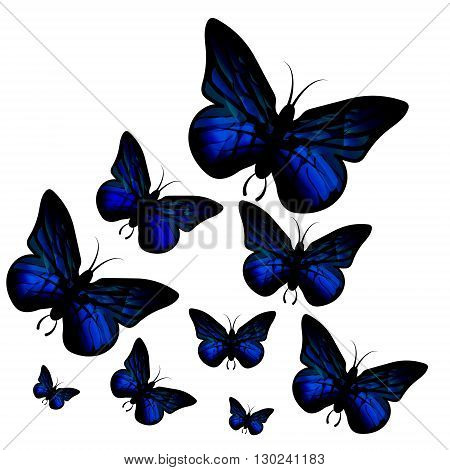 Blue butterfly isolated on white background. Papilio Ulysses. Vector.