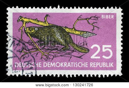 ZAGREB, CROATIA - JULY 02: a stamp printed in GDR shows Beaver, Castor fiber albicus, Wildlife Protection, circa 1959, on July 02, 2014, Zagreb, Croatia
