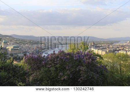 Hungary blooming lilac bushes and view from Gellert hill on the Budapest city in spring.