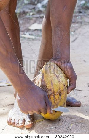 Unrecognizable Man Removing External Coat And Fiber From Coconut