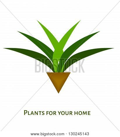 Houseplant with leaves in a pot. vector icon logo for different design