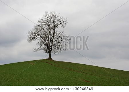 Lone Tree In Countryside