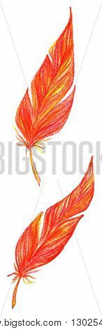 Red orange yellow bird feathers set isolated