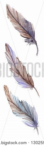 Watercolor gray grey blue violet brown feather set isolated