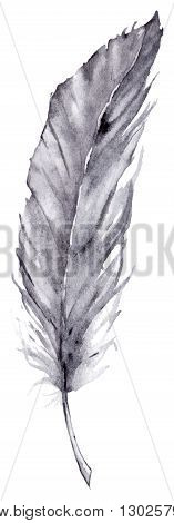 Watercolor single gray grey blue feather vector isolated