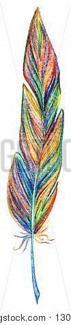 Rainbow colorful bird feather vector single isolated