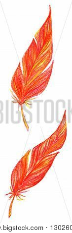 Red orange yellow bird feathers set vector isolated