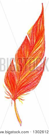 Red orange yellow bird feather vector single isolated