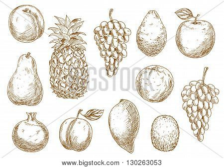 Delicate sketch drawings of grapes, peach and apple, mango and pineapple, orange and avocado, pear and plum, kiwi and pomegranate fruits. Great for kitchen interior accessories or organic farming design