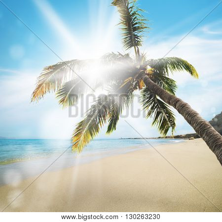 Deserted tropical beach with a coconut tree