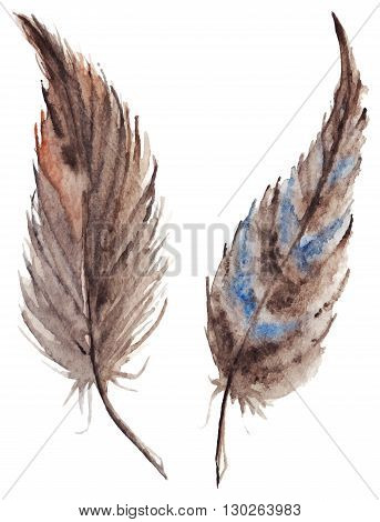 Watercolor brown gray grey feather pair vector set isolated