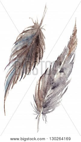 Watercolor brown gray grey feather pair set isolated