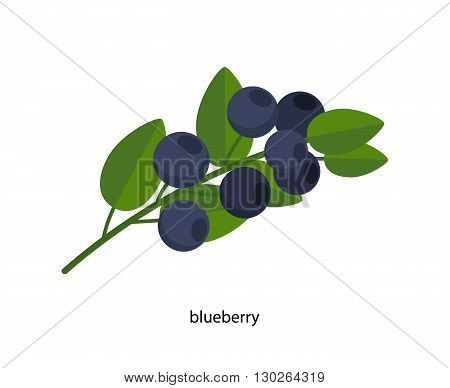 Nice sprig of blueberries with green leaves