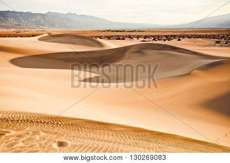 Mesquite dunes in Death Valley California USA.