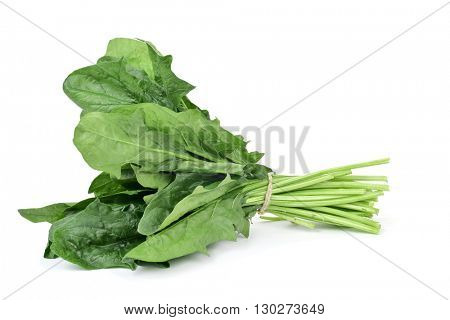 closeup of a bunch of spinach on a white background