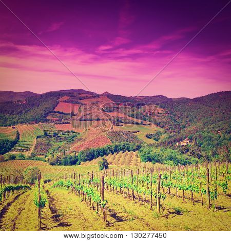 Hill of Tuscany with Vineyard in the Chianti Region at Sunset Retro Effect