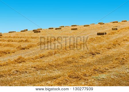 Landscape of Sicily with Many Hay Briquettes