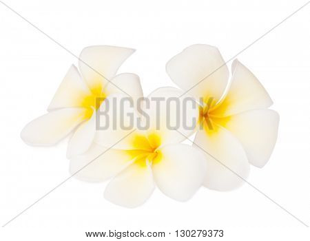 Three tropical flowers  (Plumeria)  isolated on white. Focus on the center of the middle of the flower