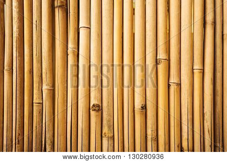Yellow fresh bamboo fence wall texture background