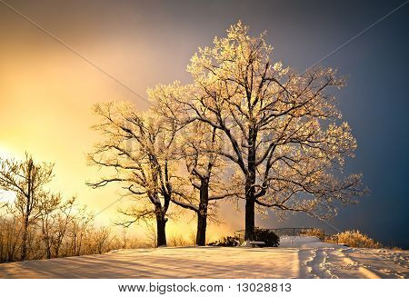 Ice And Frost Covered Oak Tree In Cold Winter Snow