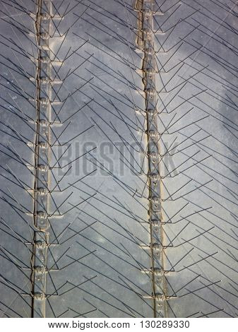 Bird Protection Spikes On A Metal Roof