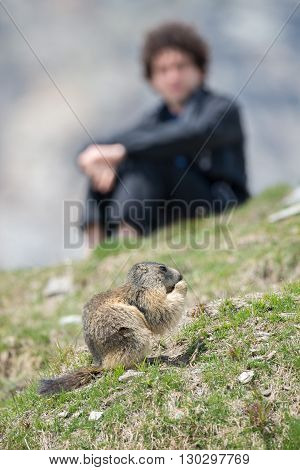 Man Observing Ground Hog Marmot