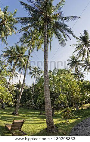 Coconut Tree Fisheye View