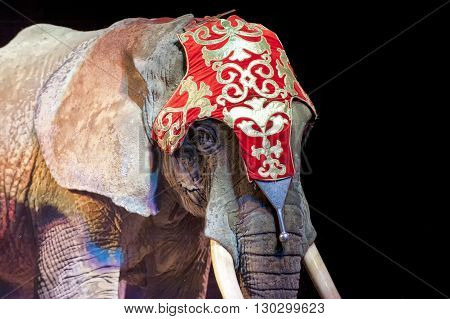 Circus Elephant On Black Background