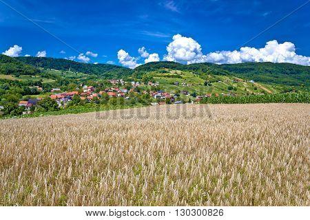 Wheat field and pictoresque mountain village in pure green nature Sudovec village in Croatia