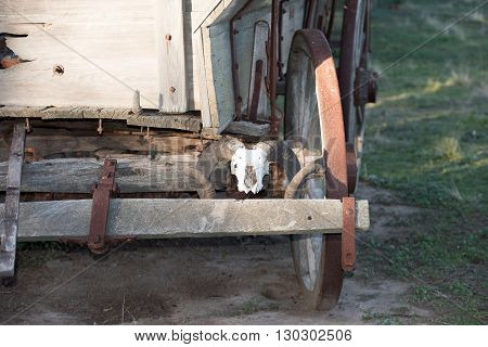 Sheep Skull On Far West Wagon