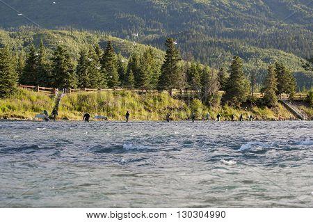 Alsaka River In Kenai Peninsula Full Of Fishermen