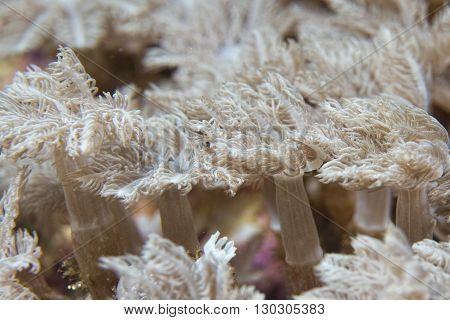 Hard Coral Macro Detail From Raja Ampat, Papua Indonesia