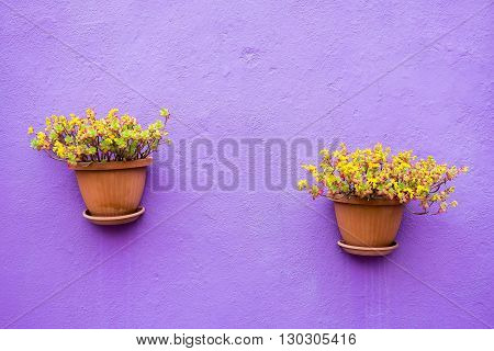 two ceramic pots with flowers or with houseplants are located isolated on the plastered stone wall and a blank space for the text
