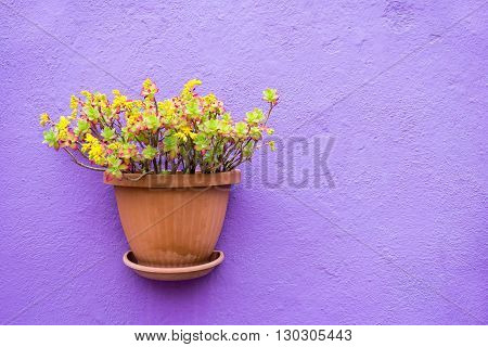 one ceramic pots with flowers or with houseplants are located isolated closeup on the plastered stone wall and a blank space for the text