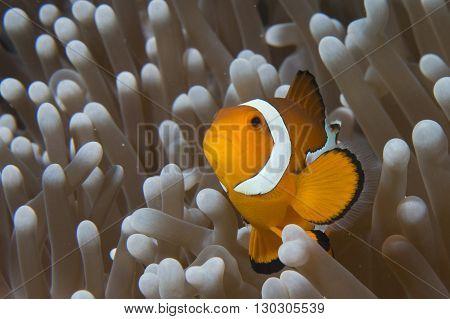 Fish And Shrimp Simbyosis