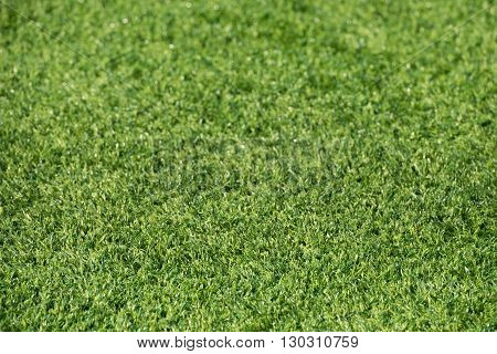 Green Synthetic Grass Field Detail
