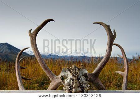 Alaska Denali Park Mc Kinley Frame
