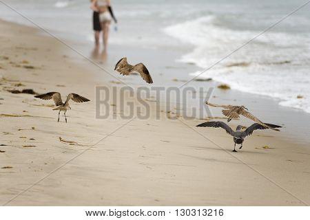 Portrait Of Seagull On Sandy Beach